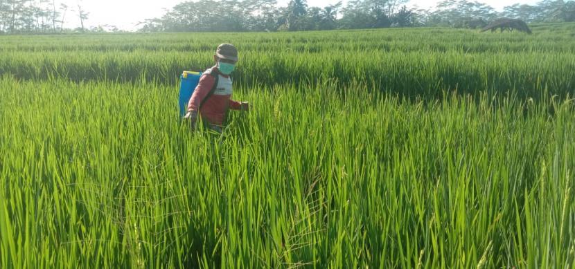 petani-menyemprot-hama-wereng_200729142410-468.jpeg