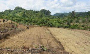 Mentan Sebut Morowali Berpotensi Kembangkan Sikomandan