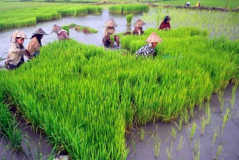 Indonesia Krisis Regenerasi Petani, Ini Saran GMNI